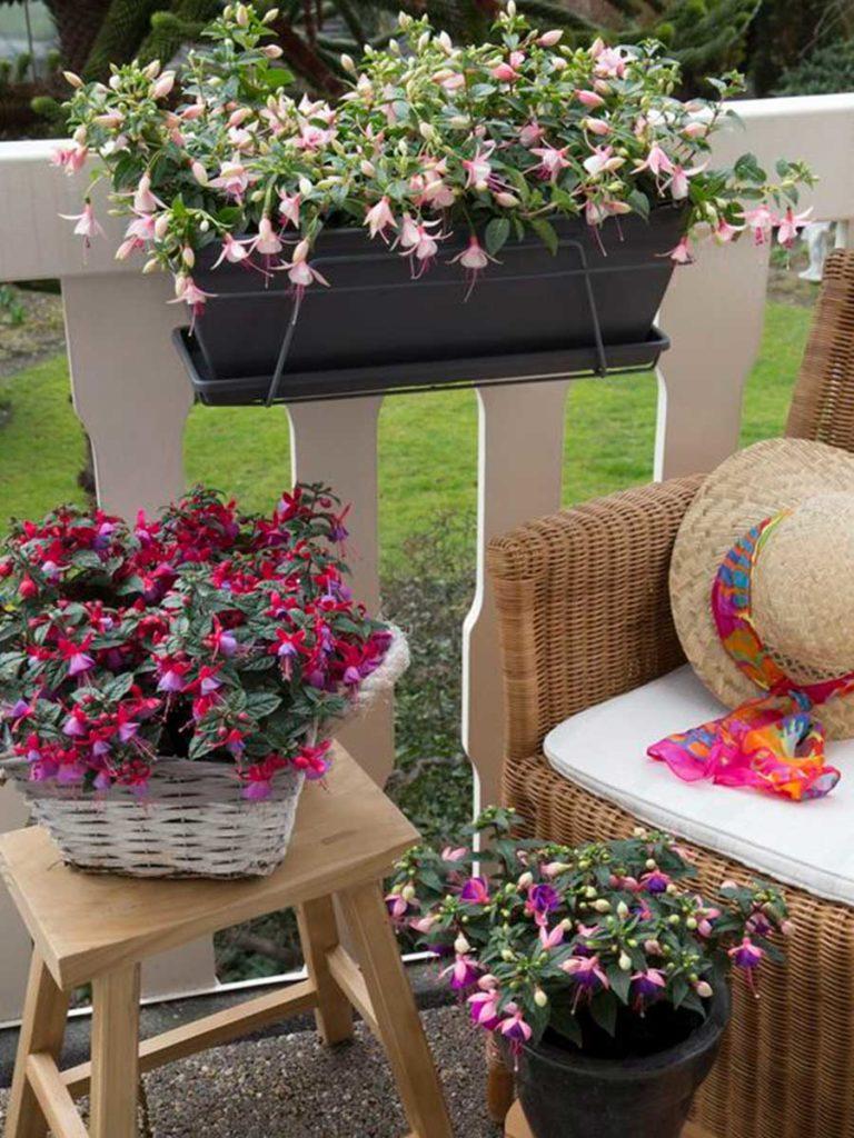 fuchsie v květináči na terase