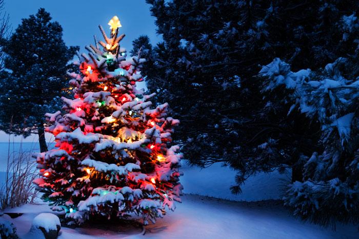 vánoční stromek v lese