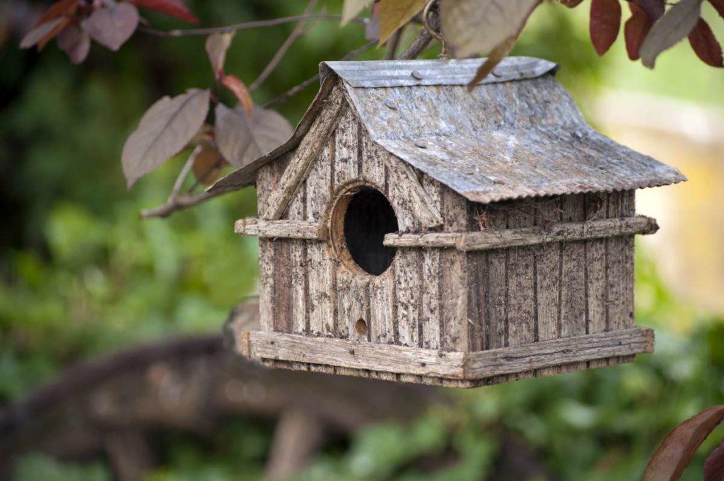 ptačí domek zavěšen na stromě