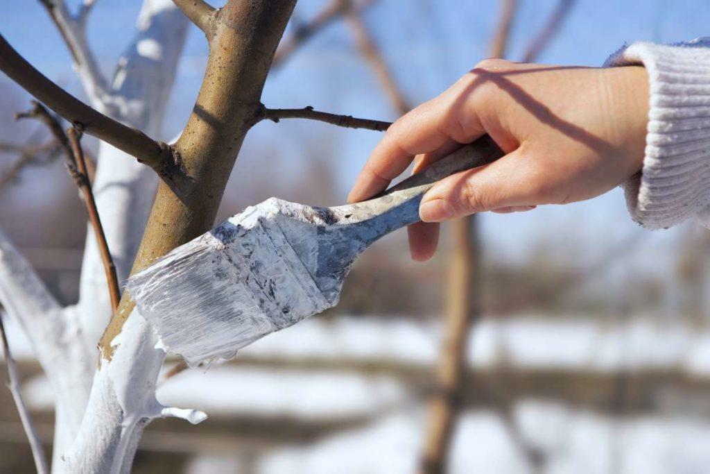 ženská ruka natiera strom bielou farbou na znak prichádzajúcej zimy