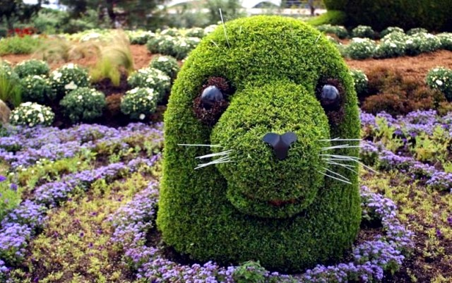 tuleň na zahradě